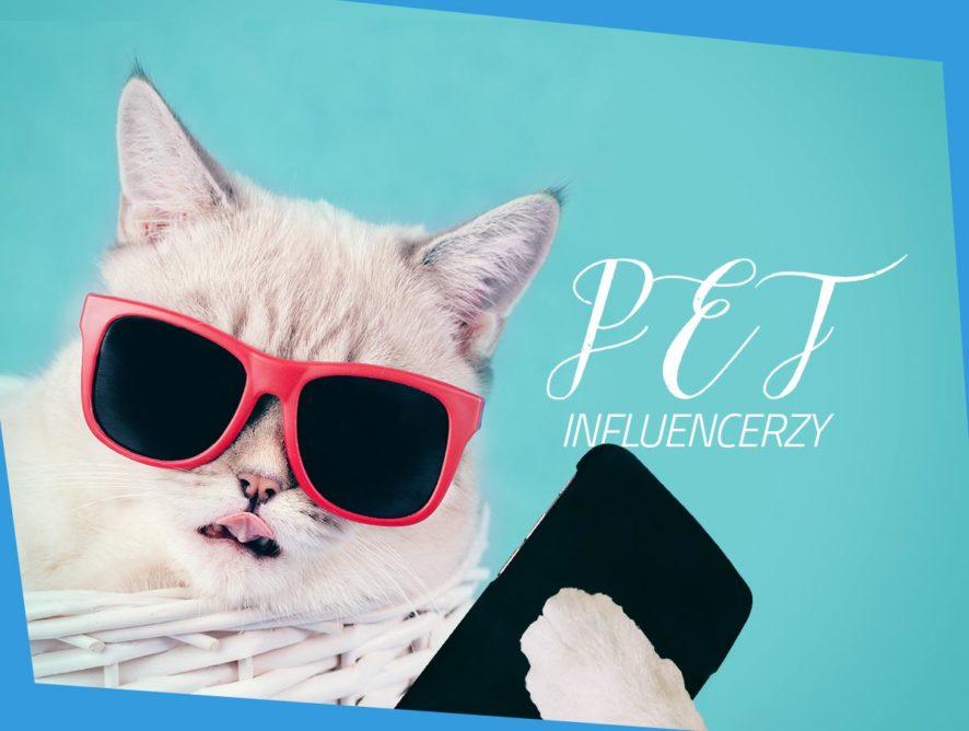 Pet influencerzy – 6 zwierzaków, które warto obserwować naInstagramie